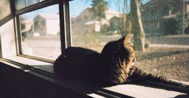 zu viel Zeit - katze am relaxen