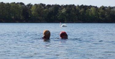 Freiwasserschwimmen: Zwei Schwimmer im See mit einem Schwan