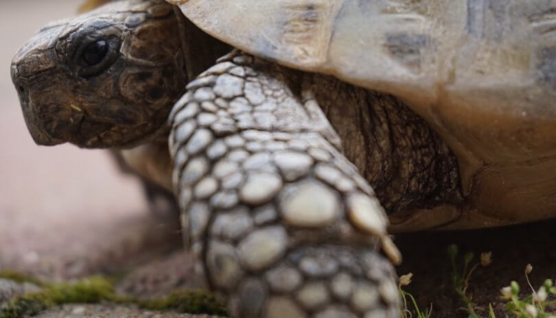Triathlon Tapering - entspannt wie eine Schildkröte