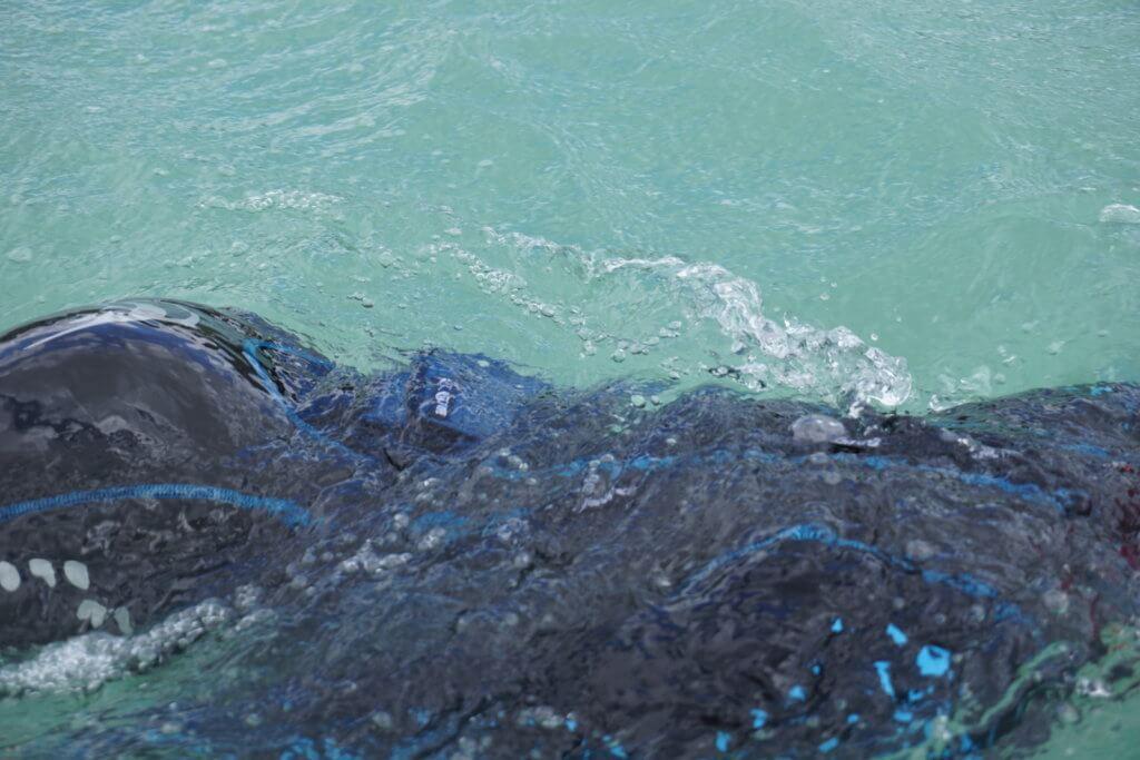 waterproofbag Test - waterproofbag beim Schwimmen unter Wasser